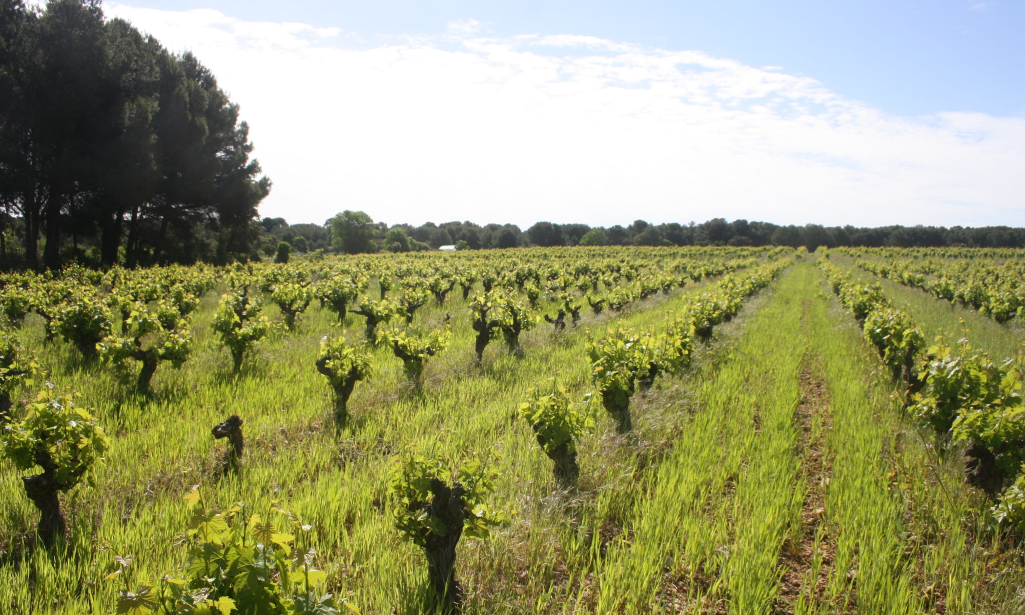 Vignes en Transition