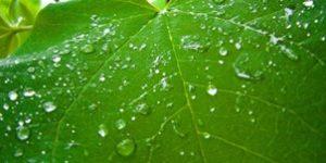 gestion eau pluviale